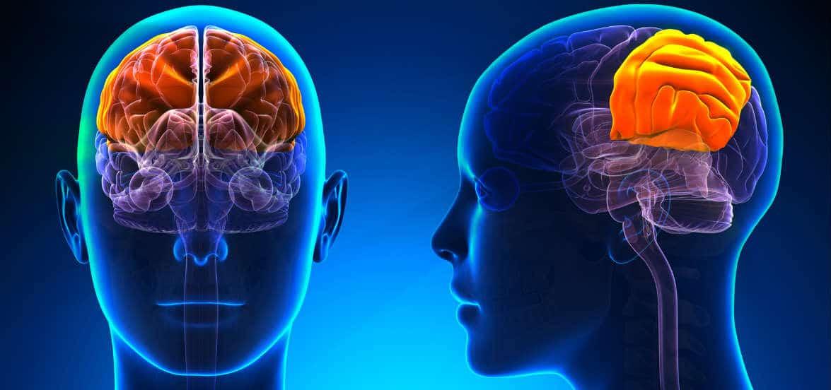 dati neurobiologici psicoterapia